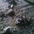 gołąb a raczej jego resztki #kamienica