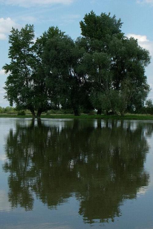 Zdjęcia ze starorzecza Wisły w Regowie.