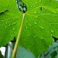 liść #liść #przyroda
