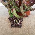 #Kaktus #Kwiatek #Flora #MałoSpotykane