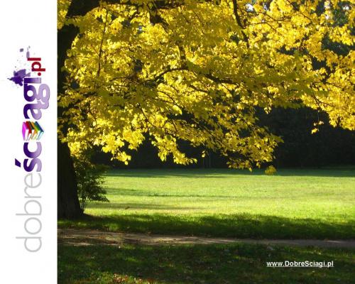 www.DobreSciagi.pl #jesień #krajobraz