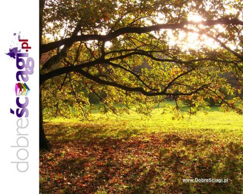 Ściągi - www.DobreSciagi.pl #jesień #krajobraz #pejzaż #tapety #wallpapers
