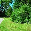 Arboretum Wirty #Pejzaż