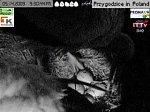 http://images38.fotosik.pl/120/1a62e234548b46d3m.jpg