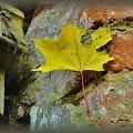 #liść #szczegół
