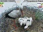 http://images38.fotosik.pl/135/5e319e0006c32998m.jpg