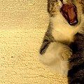 Kot by sie usmiał. #Kot #śmiech