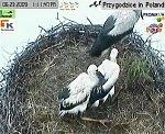 http://images38.fotosik.pl/145/d737f9286d809672m.jpg