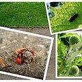 #flora #fauna #robak #oset