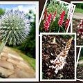 #Fauna #kwiaty #oset #roślina #flora