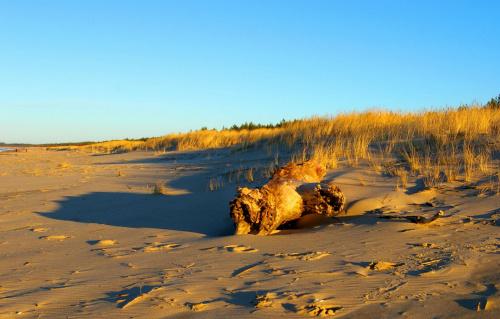 Plaża w Sobieszewie #Sobieszewo