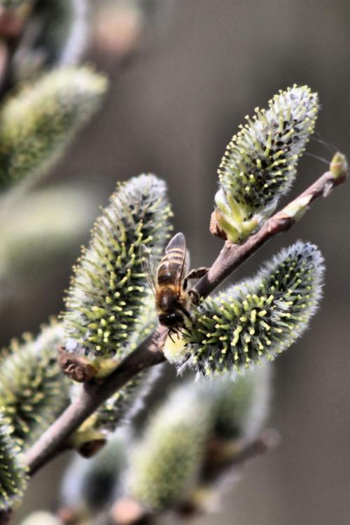 pracowite pszczółki...:))