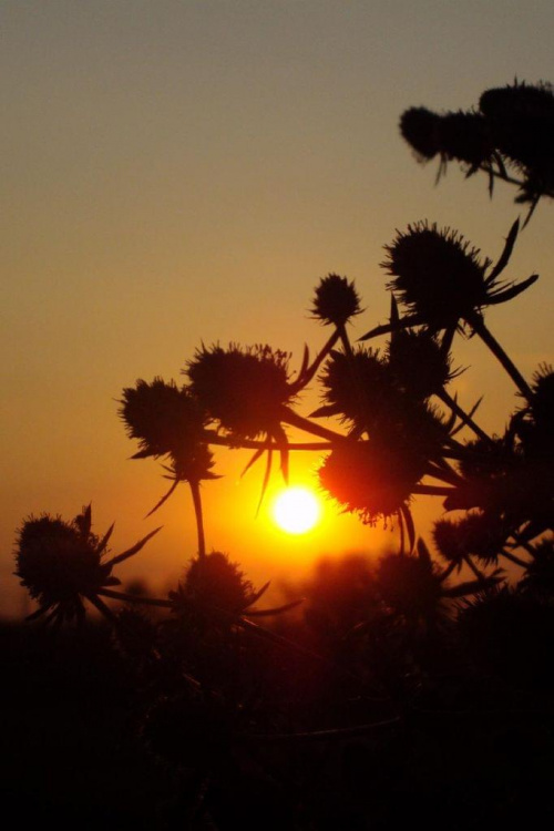 #natura #zachod #słońce