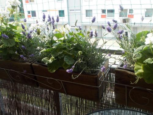 Rośliny Na Słoneczny Południowy Balkon