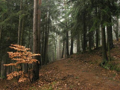 #las #drzewa #RoślinyPrzyroda #natura #jesień #pochmurno #mglisto