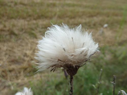 Powiew #kwiat #lato #wiatr