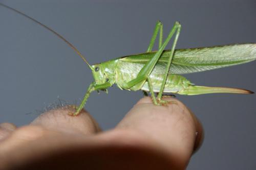 #zwierzęta #owady