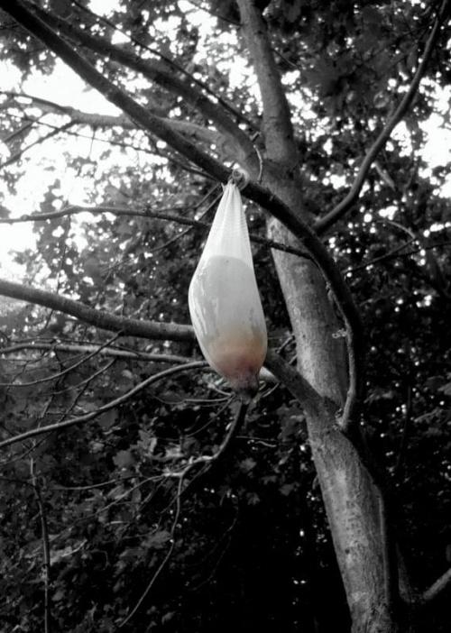 Po Owocach