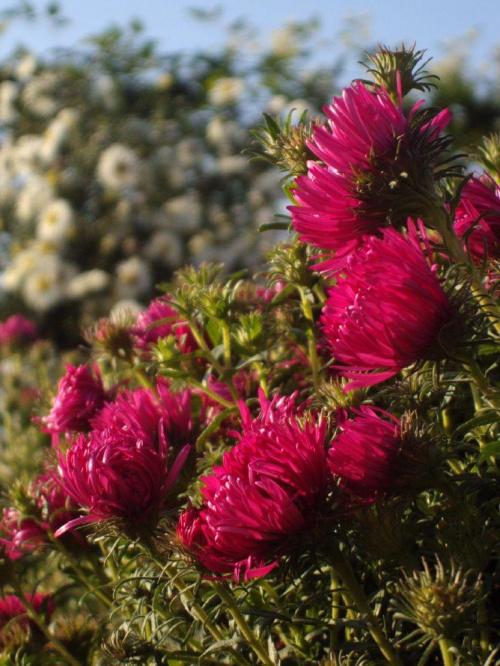 W podziękowaniu dla wszystkich moich Przyjaciól za wiele ciepłych słów.......... #kwiat #jesień #natura
