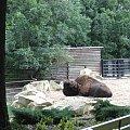 #żubr #zoo #łódzkie