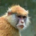 #Małpka