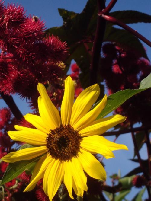 #kwiaty #ogród #niebo #jesień