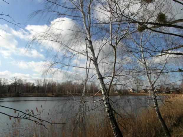 zima nad stawem #staw #zima #styczen #brzozy #slonce