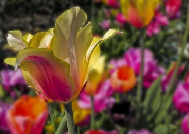 Dla Asi - Gonzki z najlepszymi zyczeniami urodzinowymi... #kwiat