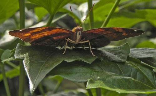 Motylek, bo juz dawno ich u mnie nie bylo...:D #evasaltarski #makro #motyl #owad