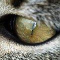 Kocie oko #kot #oko #spojrzenie #wzrok