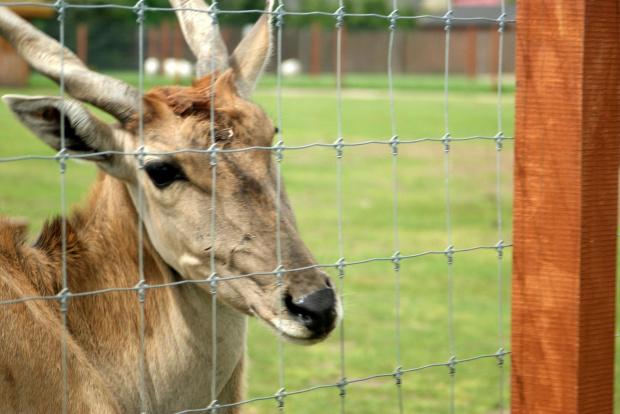 Hey ;) #Borysewo #Łódź #ptaki #safari #zoo