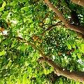 #pomarańcze #owoce #drzewo