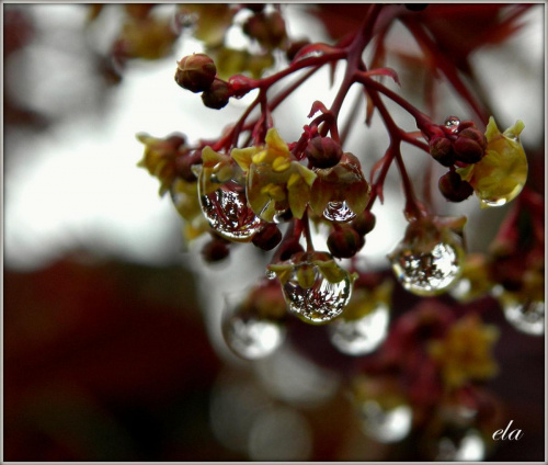 krople w dni deszczowe