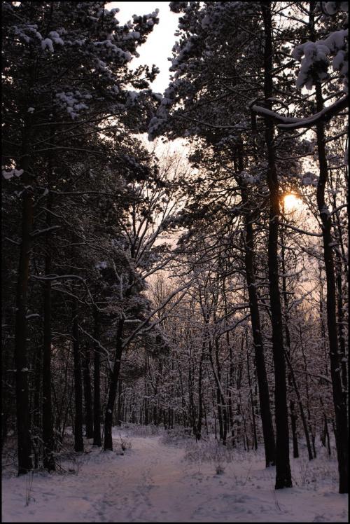 Tak na zimowo.. #zima #śnieg #las