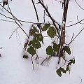 Las kabacki na biało,z domieszką zieleni.. #Warszawa #LasKabacki #zima #śnieg #las #biel #drzewa
