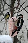 http://images38.fotosik.pl/240/e474930e6afcadbcm.jpg