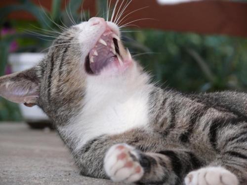 ma niezwykłe poczucie humoru - bo przecież śmiech to zdrowie xD