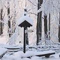 Skutki okiści - śniegowały #Góry #Łysica #GóryŚwiętokrzyskie