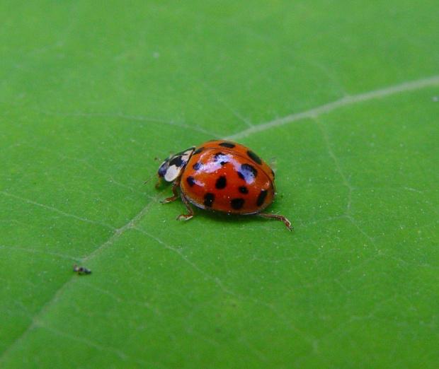 #owady #wiosna #biedronka