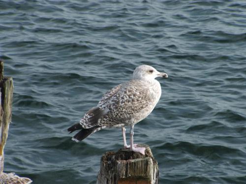 Ptak #Ptak #zwierzęta #natura