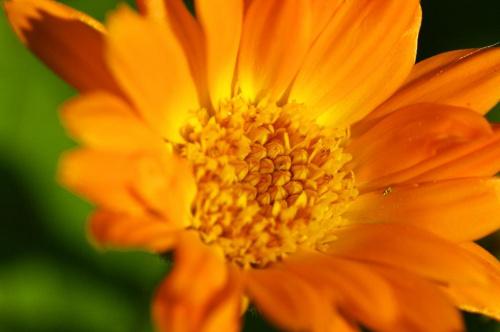Bo liczy się wnętrze.. #Kwiatek #środek #pomarańcz #makro #blisko #przybliżenie