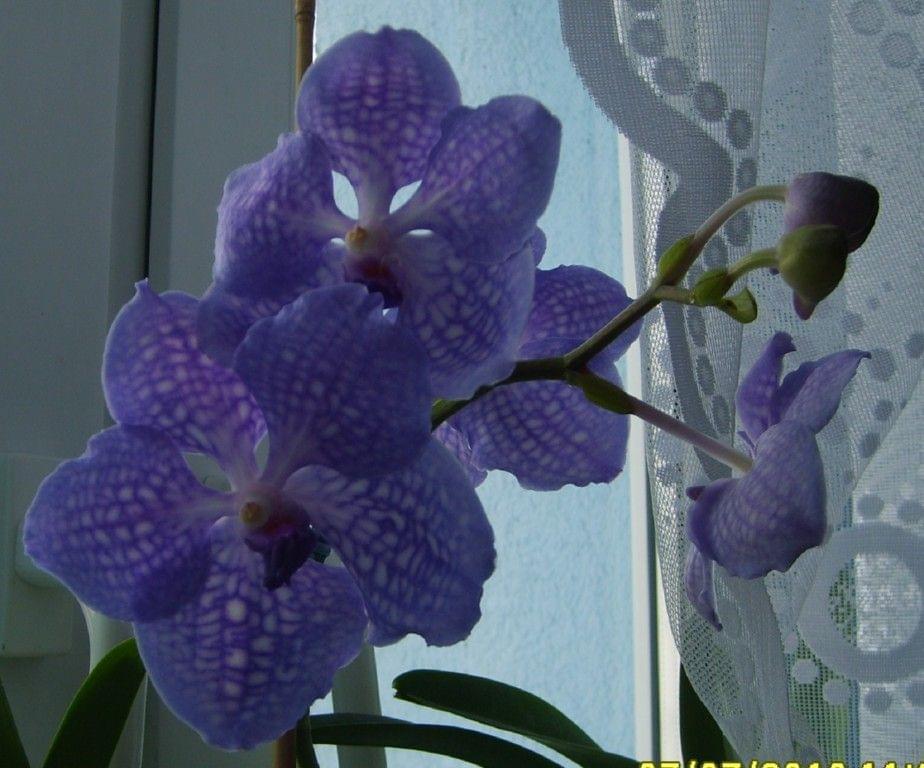 Vanda Golamco's Blue Magic 297bda41b38e84dc