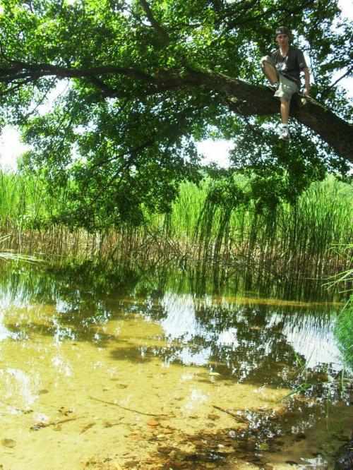 Jezioro Dąbrowa Mała koło Dąbrówna #jezioro #DąbrowaMała #dąbrówno #festeriusz