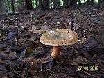 images38.fotosik.pl/328/6600fc9a96ce09bbm.jpg