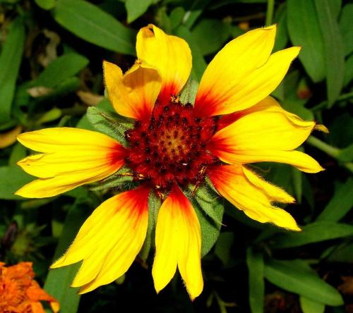 """kwiatek dla """" porannej rosy """" z pozdrowieniami ;*"""