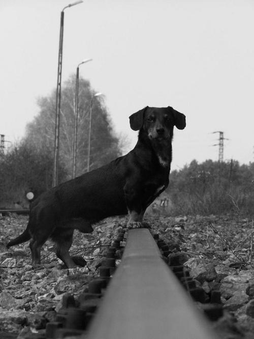 #zwierzęta #pies #wiewiórka #trawa #jeż #jamnik #tory #jabłko #zielono #CzarnoBiałe