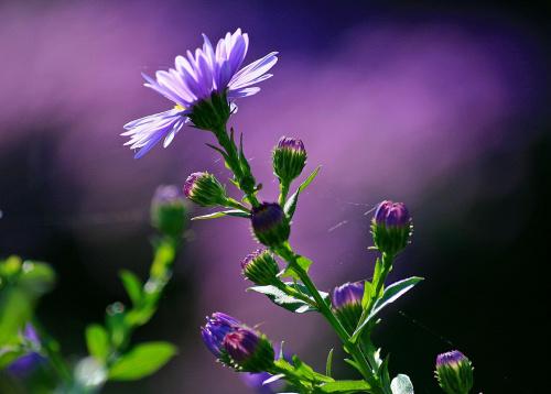 Ostatki z rabatki #kwiatek #jesien