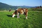 images38.fotosik.pl/376/548362742c8020dcm.jpg