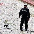 #ochrona #policja #pies #piesek #spacer