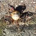 #pająk #humor #przyroda #natura #sorux